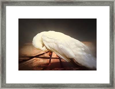 White Young Peacock Framed Print by Georgiana Romanovna