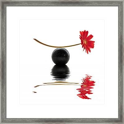 White Zen Gerbera Framed Print