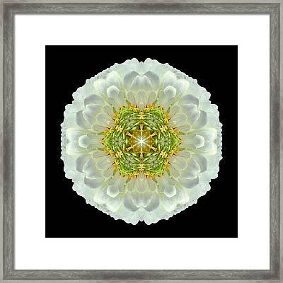 White Zinnia Elegans V Flower Mandala Framed Print