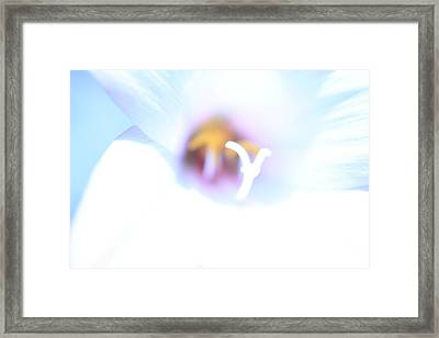 Framed Print featuring the photograph Whiteout by Greg Allore