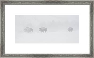 Whiteout Framed Print by Sandy Sisti