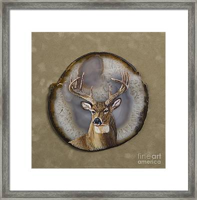 Whitetail Authority Framed Print