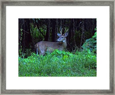 Whitetail Buck 015 Framed Print by Chris Mercer
