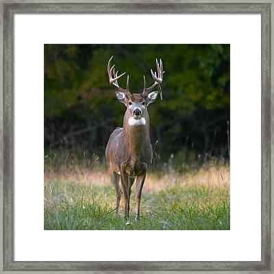Whitetail Buck Framed Print by Garett Gabriel