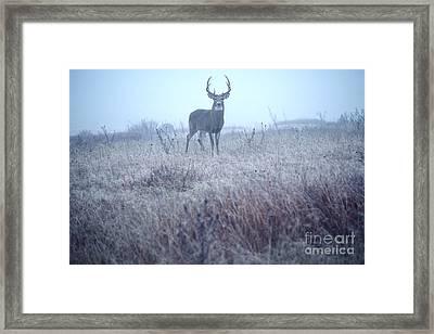 Whitetail Buck In Mist Framed Print by Thomas R Fletcher
