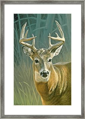 Whitetail Buck Framed Print by Paul Krapf