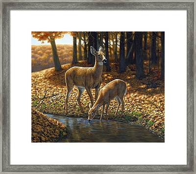 Whitetail Deer - Autumn Innocence 1 Framed Print by Crista Forest