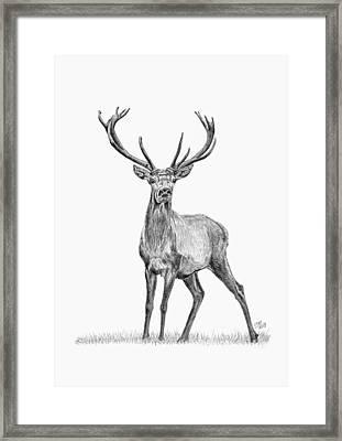 Whitetail Deer Buck Framed Print by Iren Faerevaag