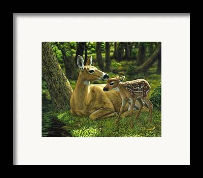 Deer Framed Prints