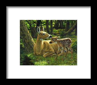 Whitetail Deer Framed Prints