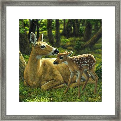 Whitetail Deer - First Spring - Square Framed Print by Crista Forest