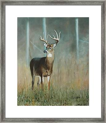 Whitetail Deer Framed Print by Jean Yves Crispo