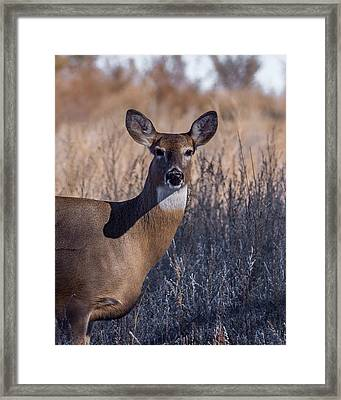 Whitetail Doe Keeping Watch Framed Print