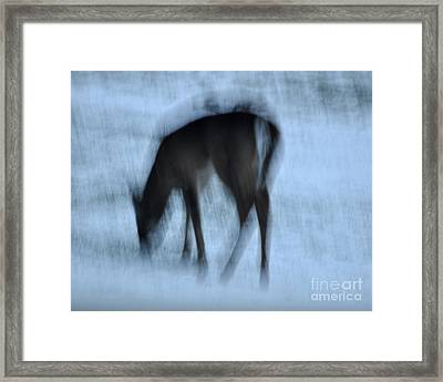 Whitetail Dreams Framed Print by Diane E Berry