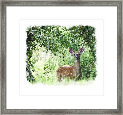 Whitetail Fawn Framed Print by Deborah Johnson