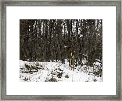 Whitetail In The Winter Framed Print