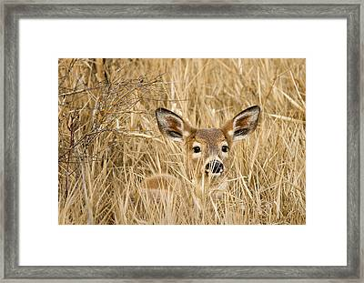 Whitetail In Weeds Framed Print