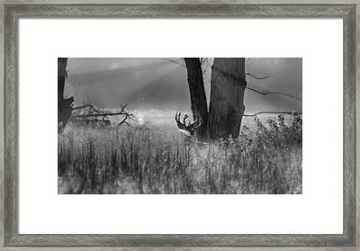 Whitetail Morning Framed Print