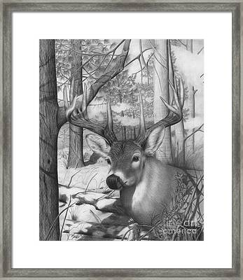 Whitetail Phantom Framed Print
