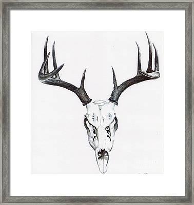 Whitetail Skull Framed Print by Elizabeth Moug
