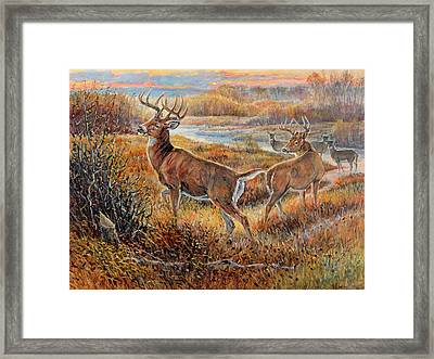 Whitetail Sunrise Framed Print