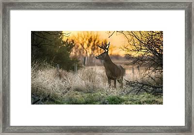 Whitetail Sunset Framed Print