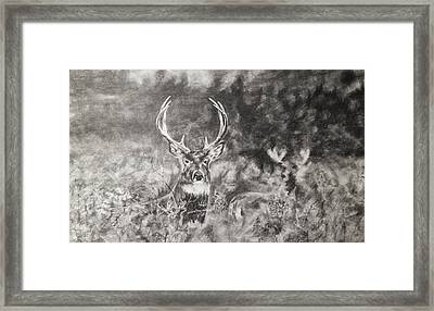 Whitetailed Deer  Framed Print by Shannon  Savage
