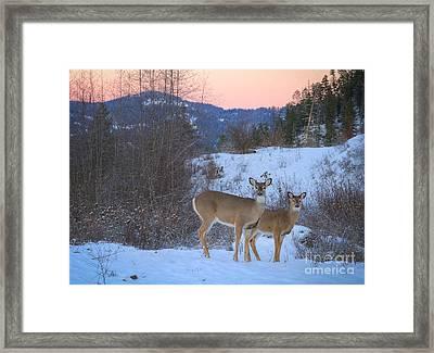 Whitetails At Dusk Framed Print by Idaho Scenic Images Linda Lantzy