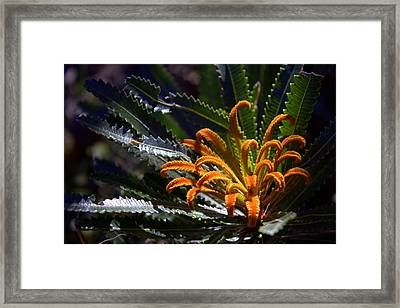 Framed Print featuring the photograph Who Am I by Miroslava Jurcik