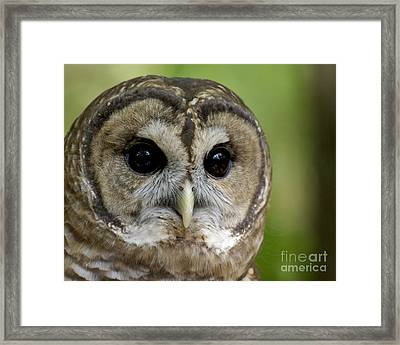 Who Are You Framed Print by Liz Masoner