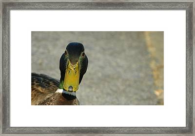 Who Are You Lookin' At? Framed Print by David  Ortiz
