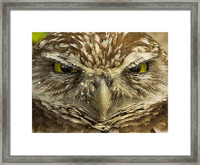 Who Are You Framed Print by Sean Allen