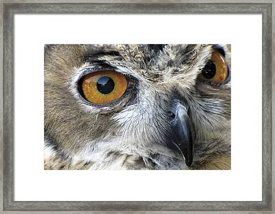 Who Framed Print by Bob Slitzan