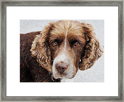 Who Dares To Stare Framed Print by Dave Byrne