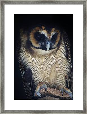 Who Gives A Hoot Framed Print by Paulette Thomas