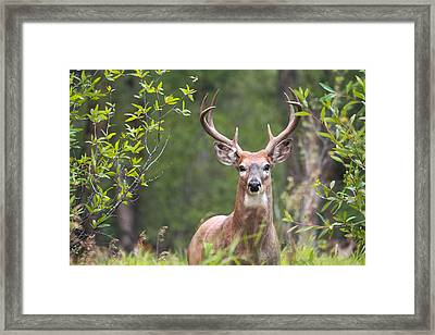 Who Goes There? Framed Print