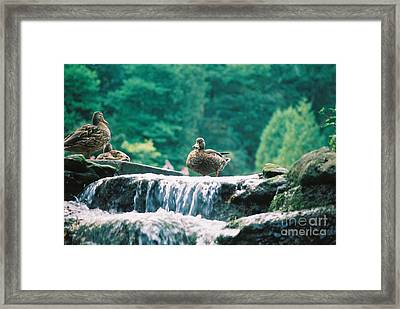 Who Is The Boy Here Framed Print