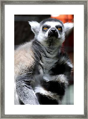 Who Me Framed Print by Jessica Tookey
