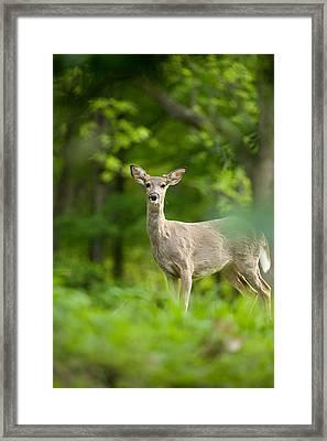 Who Me Framed Print