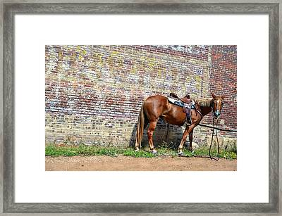 Who Me Framed Print by Kelly Kitchens
