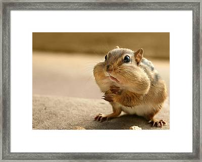 Who Me Framed Print by Lori Deiter