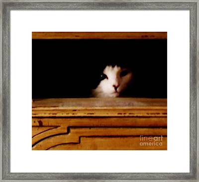 Who Me Framed Print by Sharon Costa
