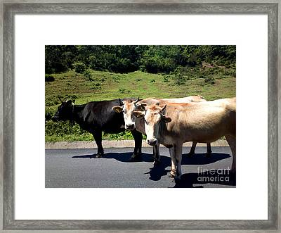 Who Moo? Framed Print