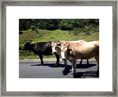 Who Moo? Framed Print