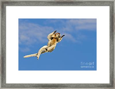 Who Needs Wings? Framed Print by Ashley Vincent