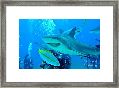 Who Said Sharks Were Mean Framed Print by John Malone