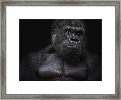 who the fuck is Klitschko? Framed Print by Joachim G Pinkawa
