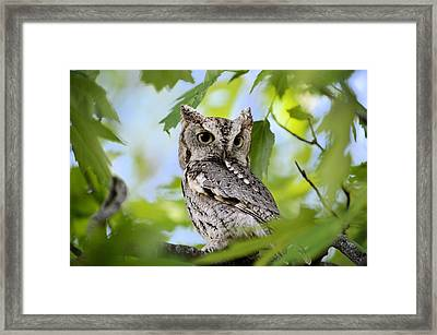 Who Was That Framed Print