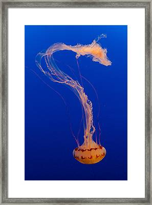 Who What Where When Purple Striped Jelly 1 Framed Print by Scott Campbell