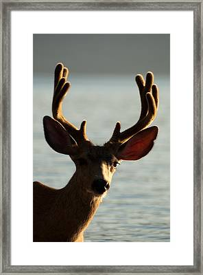 Who Ya Looking At Framed Print by Bruce Gourley